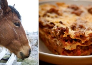 Horsemeat or beef