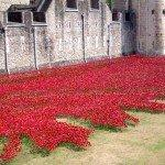 Poppies will fill the dry moat