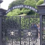 The Poison Garden of Hogwarts