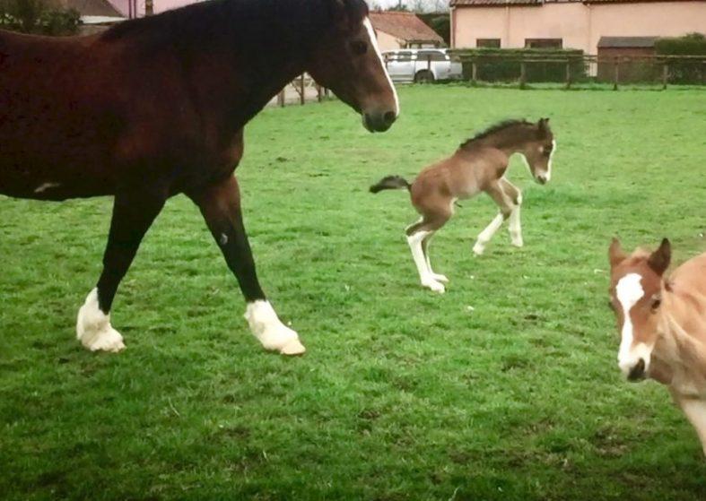 Rare twin foals born