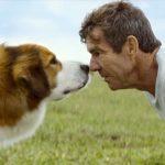 devoted dog and Denis Quaid