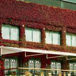Wimbledon home of tennis