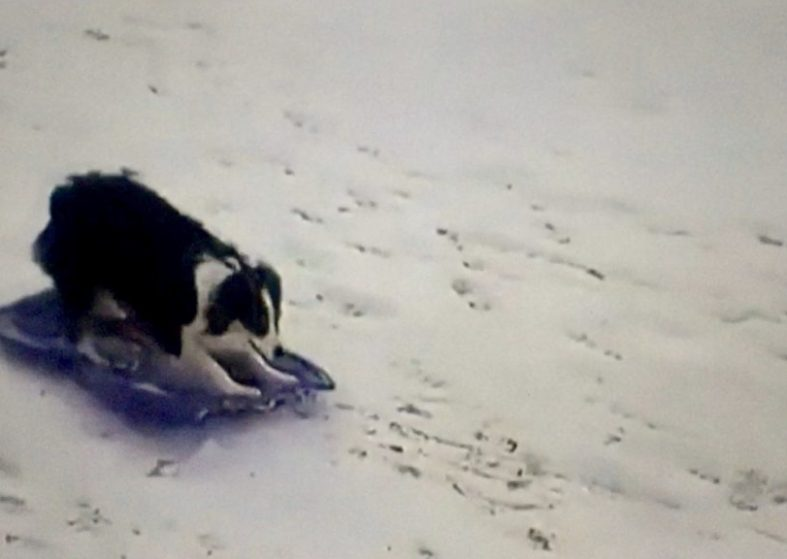 Animals Enjoying US Winter Storm