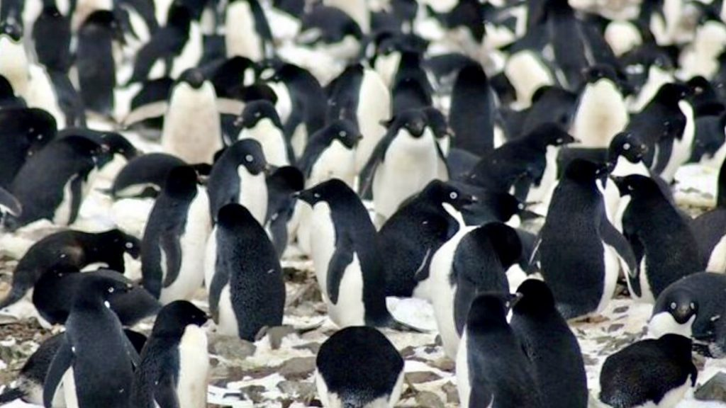 Penguin Super Colony Spotted From Space