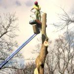 Sheffield Tree Felling