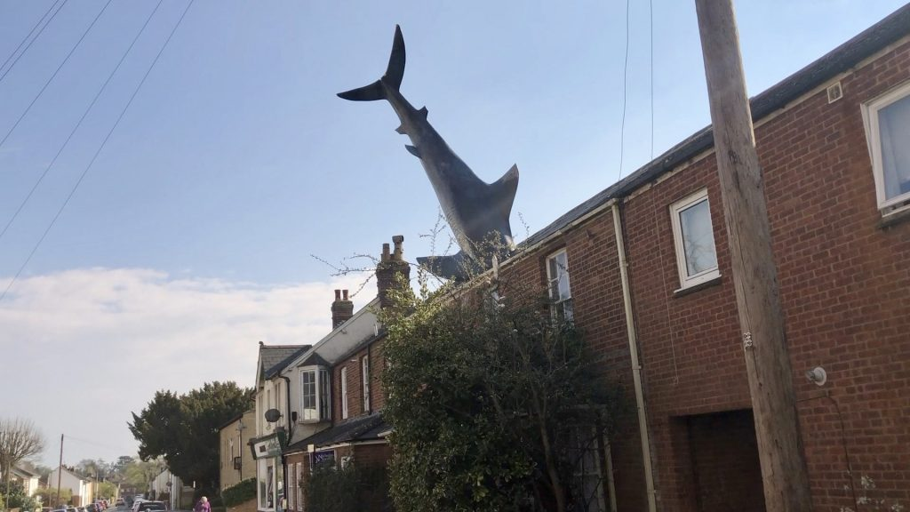 Shark Stays Hooked On Roof