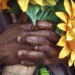 sunflowers an inspiration