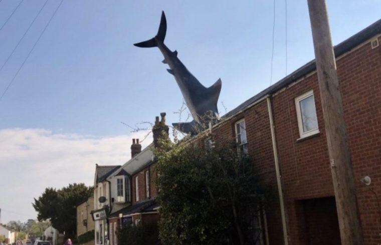 Shark Stays Hooked On Roof