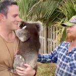 cuddly koala bear