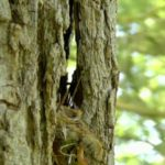 springwatch tree