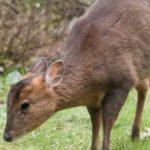 BBC: spring wildlife webcams live!