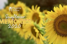 Sunflower Memories 2020