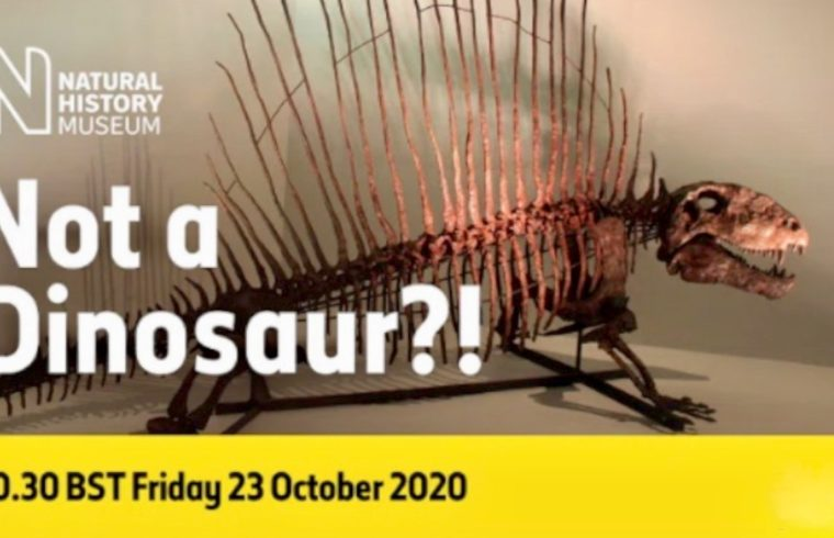 Live: I can't believe it's not a Dinosaur - 1030   YNUKtv