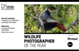 Live: Wildlife Photographer of the Year 2020