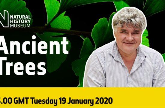 Live: Extinct Trees Rediscovered
